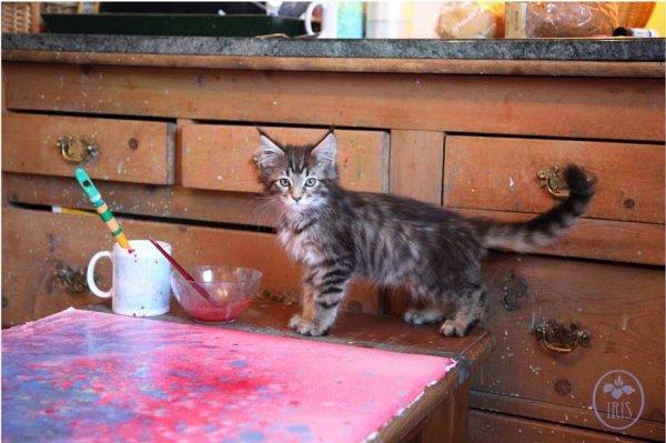 Thula , le chat devenu l'ange gardien d'une petite fille autiste