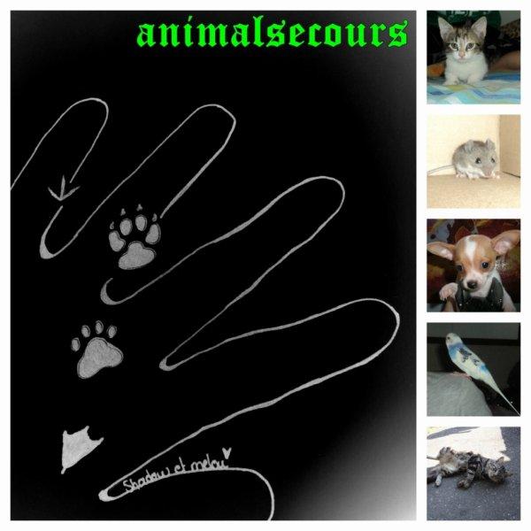http://wildhor47.wix.com/animalsecours