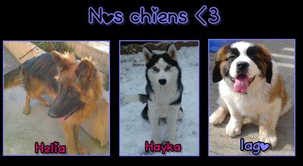 Nos chiens ♥