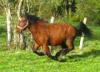 Teuskal-Leponney