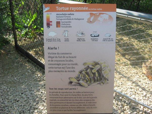 Aujourd'hui dimanche de la pentecôte 2015  : parc zoologique de Vincennes n°1