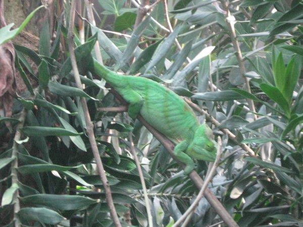 Suite parc zoologique de Vincennes n°2