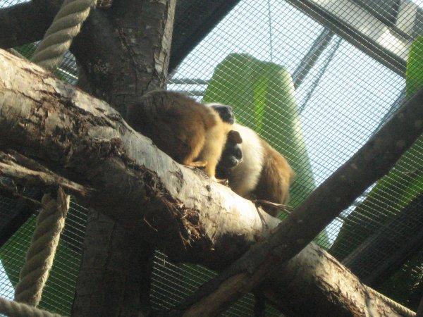suite parc zoologique de Vincennes n°3