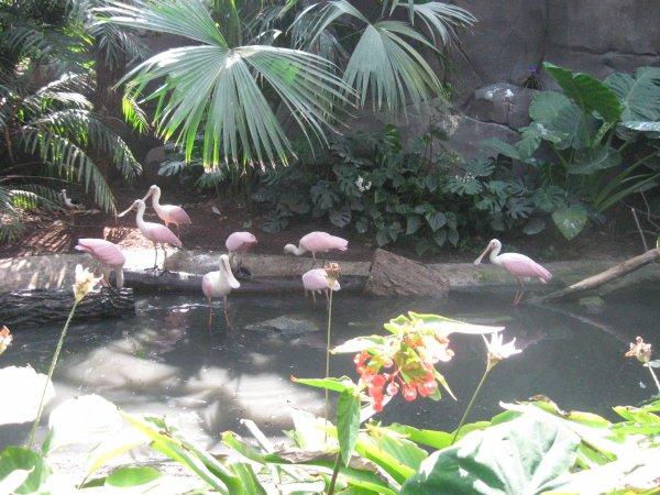 suite parc zoologique de Vincennes n°4