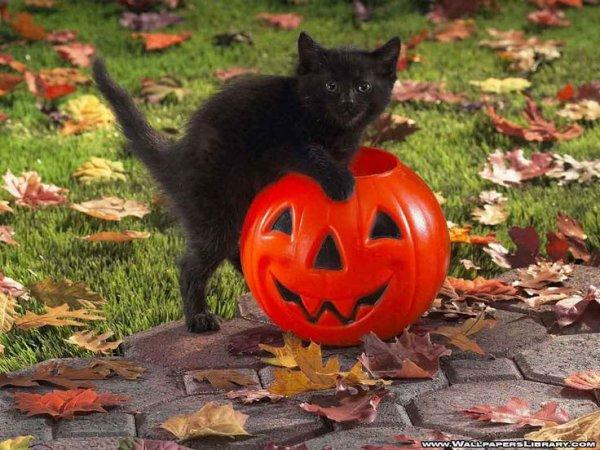 Attention au chat !!!!!!