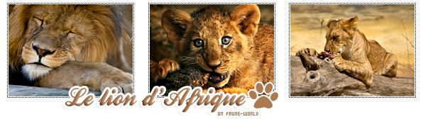 _______» ARTICLE N°20 :LE LION_______ » Posté le 31 Août 2009 » Faune-world.skyblog.com
