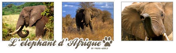 _______» ARTICLE N°30 :L'ELEPHANT D'AFRIQUE_______ » Posté le 26 Septembre 2009 » Faune-world.skyblog.com