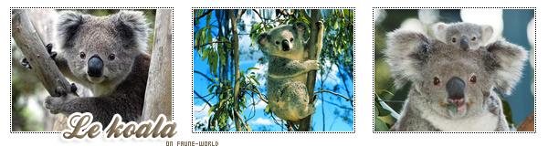 _______» ARTICLE N°52 :LE KOALA_______ » Posté le 10 Avril 2010 » Faune-world.skyblog.com