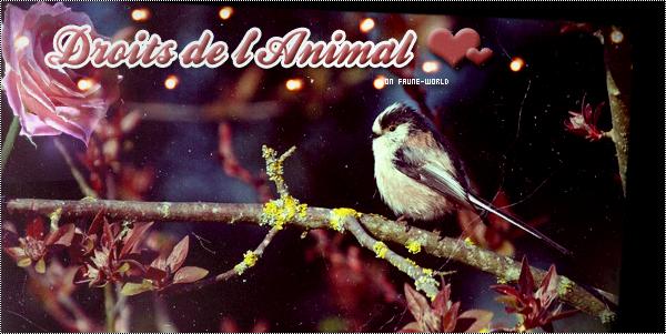 _______» ARTICLE N°64 :DECLARATION UNIVERSELLE DES DROITS DE L'ANIMAL_______ » Posté le 11 Juin 2010 » Faune-world.skyblog.com