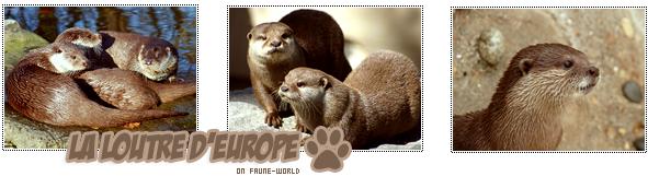 _______» ARTICLE N°86 :LA LOUTRE D'EUROPE_______ » Posté le 18 Avril 2011 » Faune-world.skyblog.com