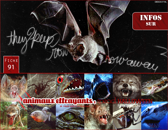_______» ARTICLE N°99 :ANIMAUX EFFRAYANTS - SPECIAL HALLOWEEN_______ » Posté le 31 Octobre 2011 » Faune-world.skyblog.com