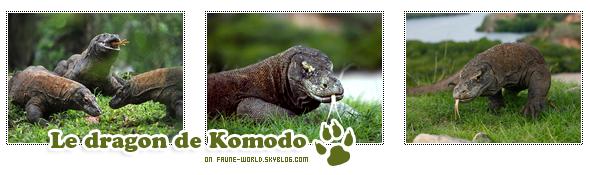 _______» ARTICLE N°105 :LE DRAGON DE KOMODO_______ » Posté le 17 Janvier 2012 » Faune-world.skyblog.com