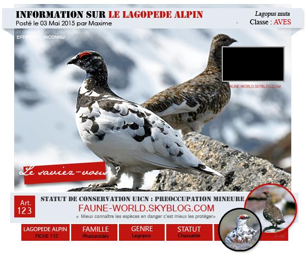 _______»  ARTICLE N°123 : LE LAGOPEDE ALPIN_______ » Posté le 03 Mai 2015 » Faune-world.skyblog.com