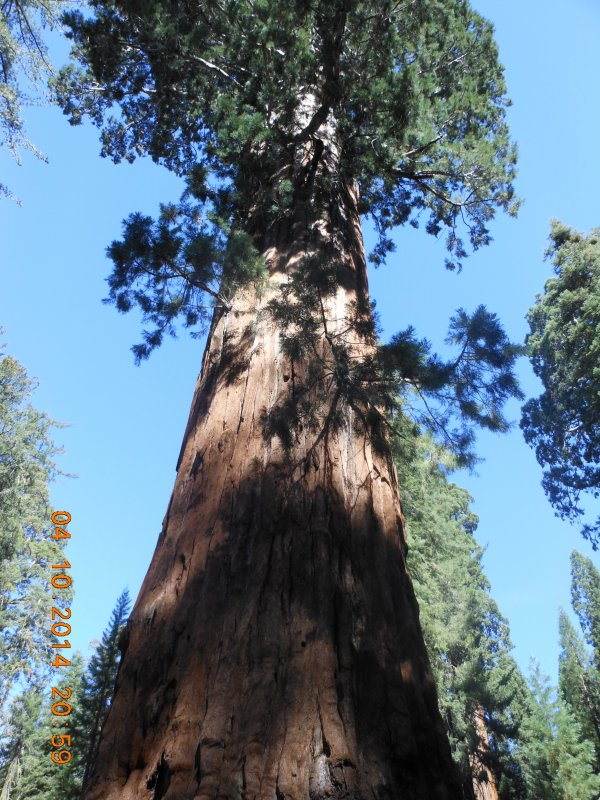 USA : SEQUOIA NATIONAL PARK (CALIFORNIE).