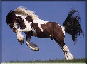 quand les chevaux se défoule