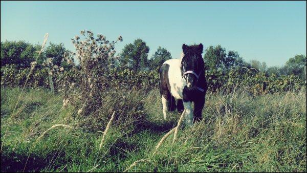L'air du paradis est celui qui souffle entre les oreilles d'un cheval..