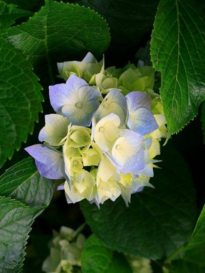 des fleures