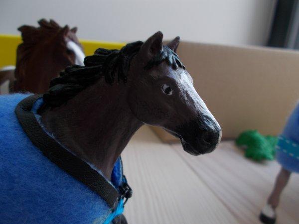 Un nouveaux cheval au Haras Du Parc