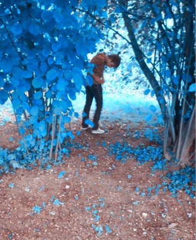 Je suis un petit grand enfant , j'habite au Pays des Rêves où les arbres sont bleus et les enfants naissent dans les roses ou les choux