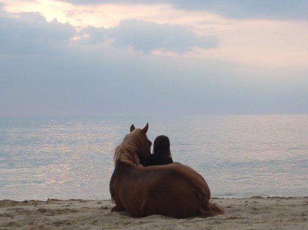 Regarde loin, très loin, derrière l'océan, tu vois cette île? Si tu décidais d'y aller, je traverserai l'océan à la nage pour te retrouver...