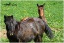 Photo de Horse-CARO-AND-QUIETA
