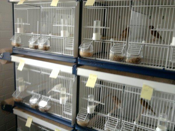nouvelles cages pour 2011