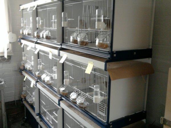 12 nouvelles cages pour 2011 ( italgabbie )