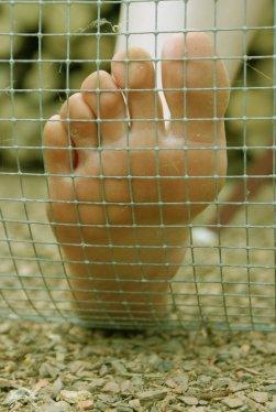 Album n°3: Les pieds