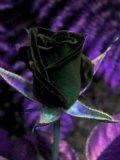 Photo de miss-rock-84-poeme