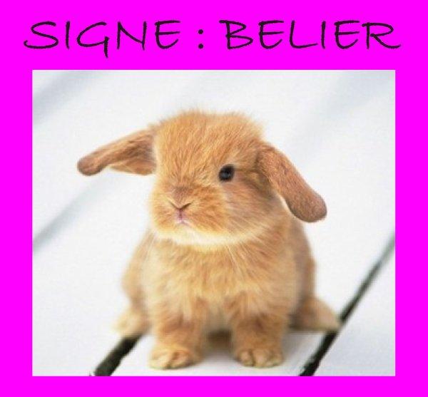 SIGNE BELIER
