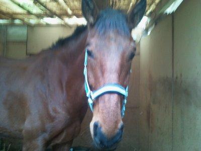Il y a plusieurs endroits merveilleux dans le monde, mais l'endroit que je préfère avant tout, est le dos de mon cheval