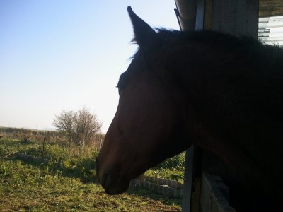 Demandez-moi de vous montré de la poésie en mouvement et je monterai un cheval.