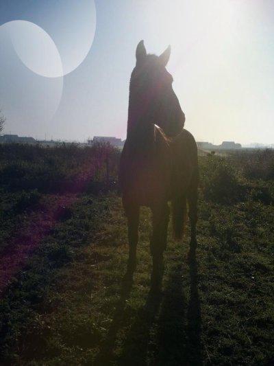 Le cheval est un don de Dieu à l'homme