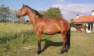 Si un jour mon cheval et moi venions a tomber, verifiez bien qu'il se relève avant de vous occupez de moi. Si il ne se relève pas, laissez moi.