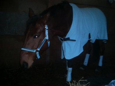 Le meilleur des chevaux n'est pas celui qui t'as mené ou tu voulais alors que tu étais en selle, mais celui qui a fait voyager ton coeur alors que tu l'écoutais respirer
