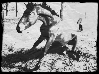 Ouvre lui ton coeur et pour toi ce cheval ira decrocher la lune