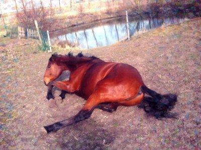 Le cheval idéal, c'est celui qu'on accepte avec ou sans défauts