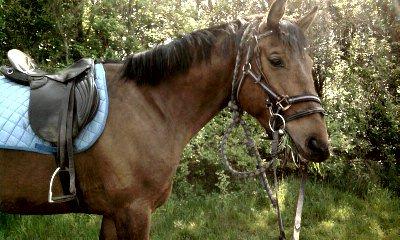 Rencontré un cheval c'est être tenus en éveil par une énigme.