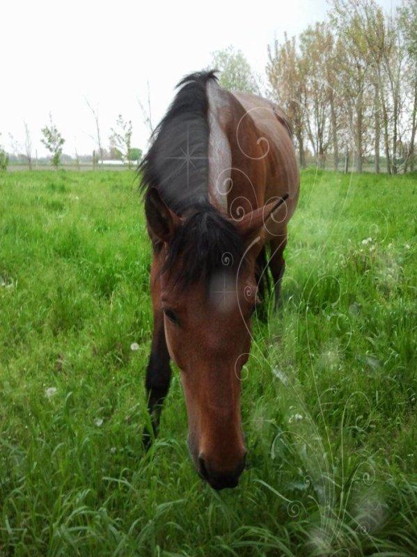 Faites du cheval un compagnon et non un esclave, vous verrez quel ami extraordinaire il est