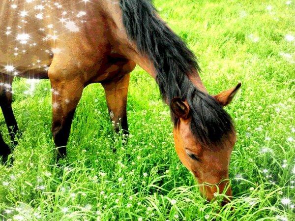 Cavalier, quelque soi l'obstacle, jette ton coeur par dessus & ton cheval ira le chercher