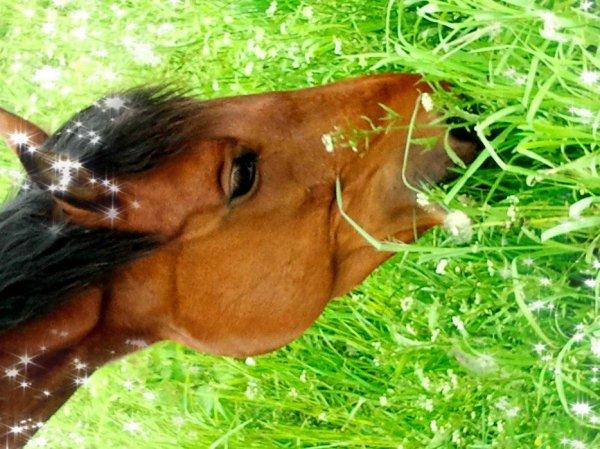 le cheval est pour l'homme comme les ailes pour l'oiseau