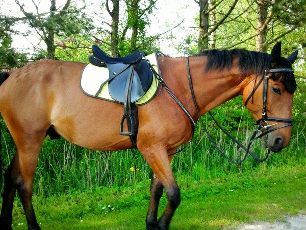 Le cheval c'est un ami fidele qui comprend nos sentiments , qui nous donne une grande confiance en soie et qui est toujour la pour nous.
