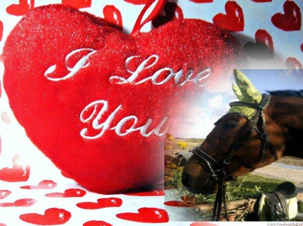 Le respect du cheval, c'est la fondation de la liberté