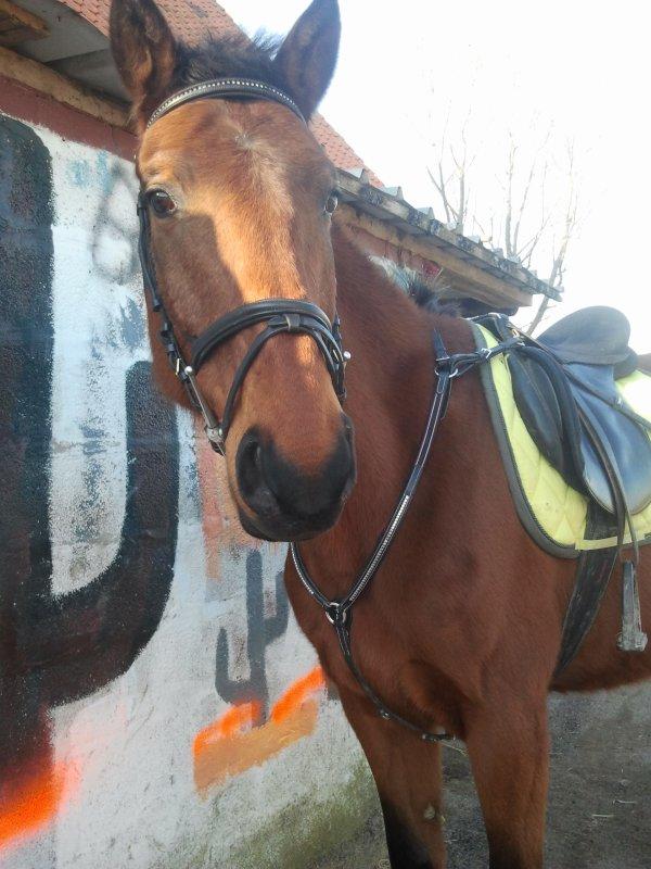Quarter Horse Farm