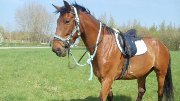 une super balade avec le quater horse farm <3
