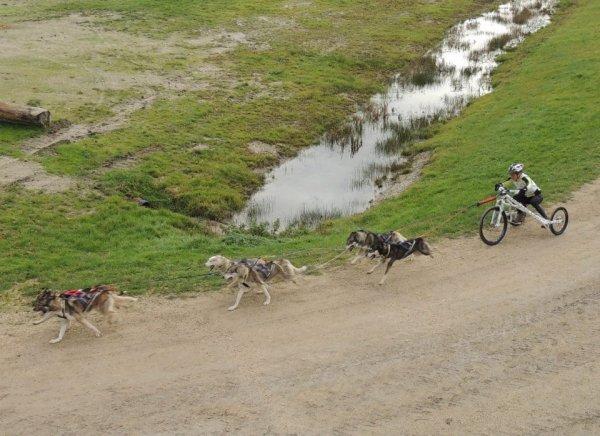 Championnat de France Dryland 6 chiens