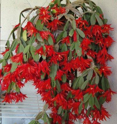 Plante verte fleurie for Plante exterieur fleurie