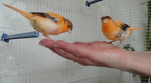 Mes oiseaux apprivoiser,un moment de bonheur !