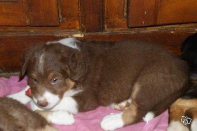 Les derniers bébés de Cyrus nés le 06 Novembre 2011