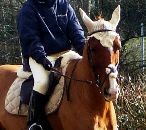 Le Blog de mes chevaux